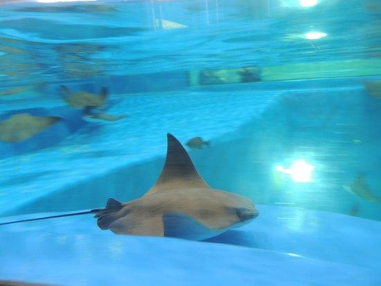 stingray touch pool picture of the institute for marine mammal rh tripadvisor co nz