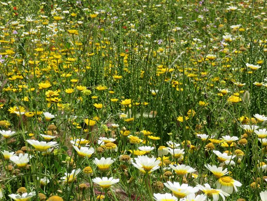 Quelfes, Portugal: wildflowers in grounds