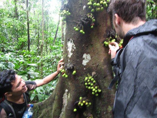 Kutacane, Indonesien: Rudy