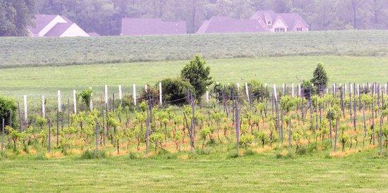 Mount Felix Vineyard & Winery照片