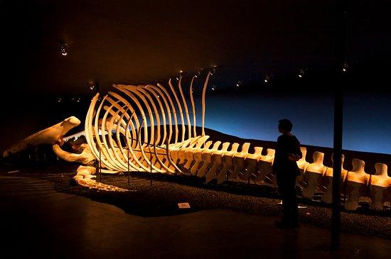 胡萨维克鲸博物馆