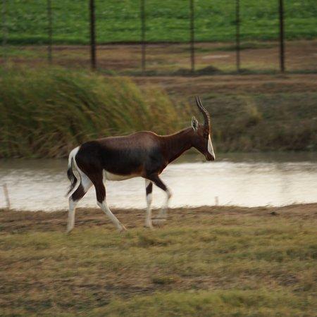 Addo, South Africa: photo8.jpg