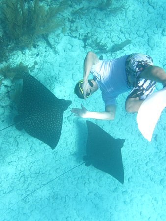 Marsh Harbour, Great Abaco Island: Flying with the eagle rays ~