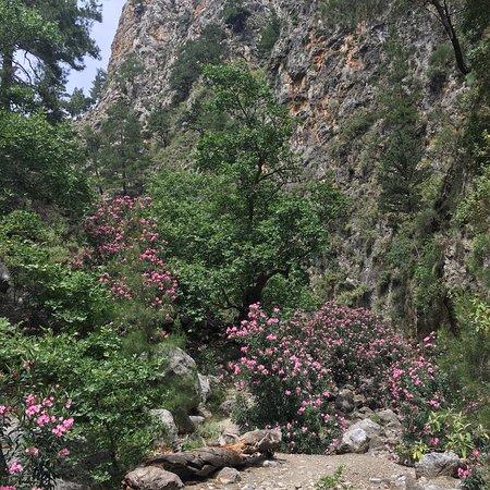 Sougia, اليونان: photo0.jpg