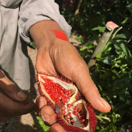 Anse Royale, Seychellerna: Kot Man-Ya Exotic Flower Garden