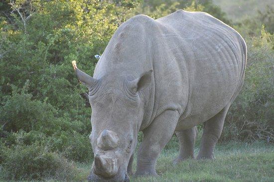 Paterson, Südafrika: Wild life