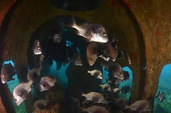 Mar De Noronha: A segurança me fez entrar no túnel do naufrágio,grudada no meu fiel Bruno! Fotos de Roberta Vieg