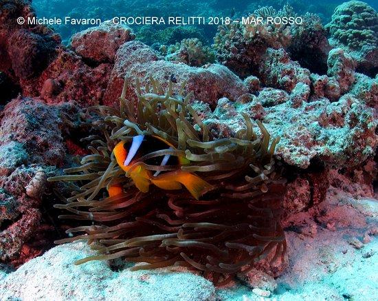 Limena, Italië: Mar Rosso Immersione capodanno 2018