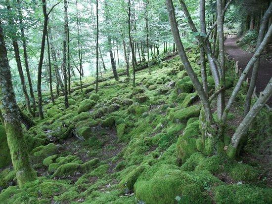 Jardin de Berchigranges: sous bois