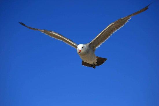 Glen Lyon Inn: Eagle flying over the Hardy bay