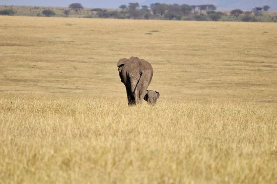 Serengeti Migration Camp: Mom and baby elephant.