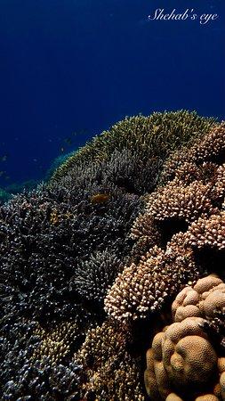 Shehab Boat Diving Center: Aquarium south