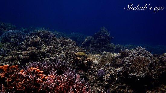 Shehab Boat Diving Center: Aquarium South 2