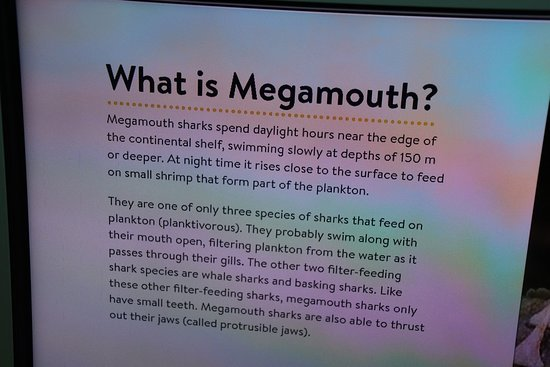 Western Australian Maritime Museum: What is megamouth?