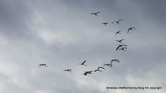 Discovering Cagliari: Flamingos flying in formation