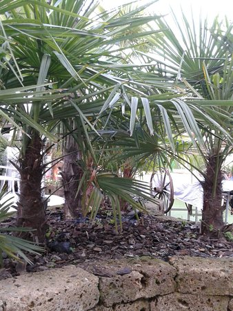 20180519 193110 Large Jpg Picture Of Terrazza Yucca Busto