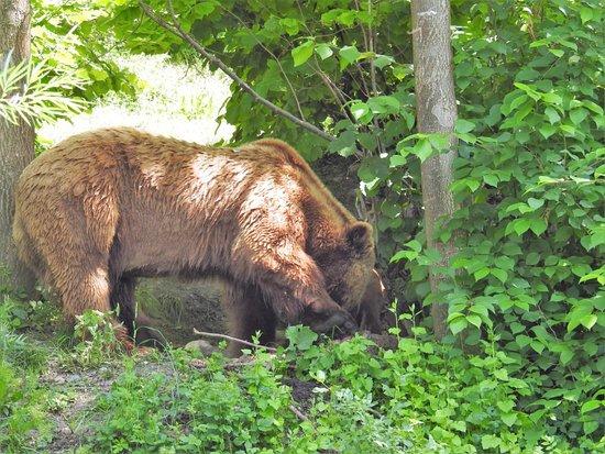 Barenpark: BEAR 3