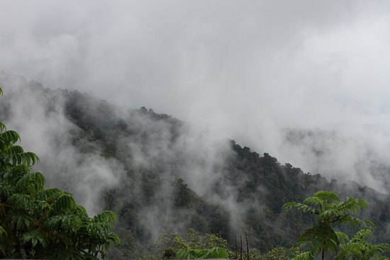 Nyungwe National Park: Typical view of the amazing primary rainforest