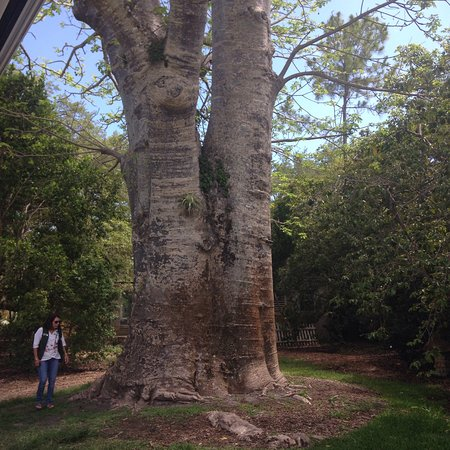 Fairchild Tropical Botanic Garden: photo6.jpg