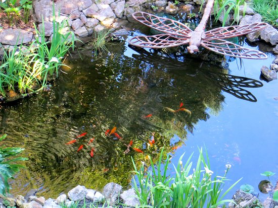 Gibraltar Botanic Gardens (The Alameda): Fish Pond