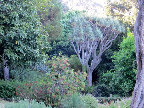 Gibraltar Botanic Gardens (The Alameda): Some of the vegetation