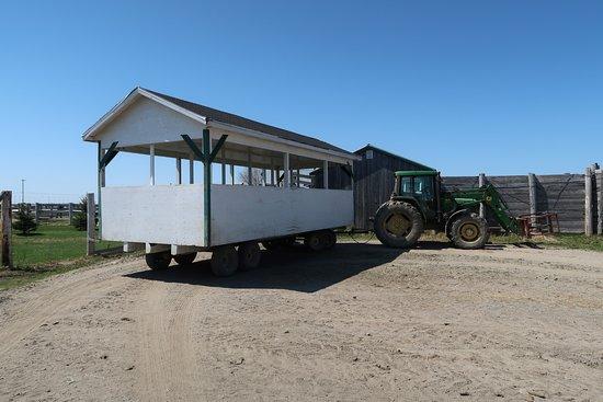 """Champlain, Kanada: La """"casetta"""" trainata dal trattore su cui si fa la visita nel recinto."""