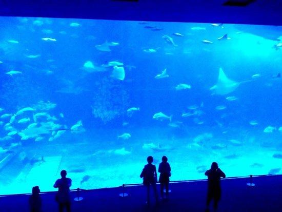 Okinawa Churaumi Aquarium ภาพถ่าย