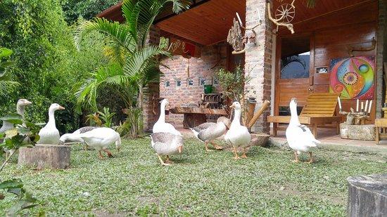 Restaurante La Barcaccia: Nuestra mascotas