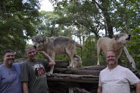 Chipley, FL: The wolf on the right was giving Greg a birthday howl ! (L-R) Brian, Joe and Greg