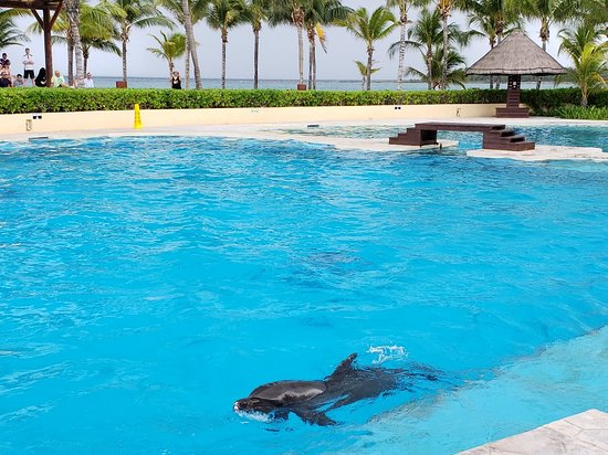 Dolphinaris Barcelo: 20180513_114419_large.jpg