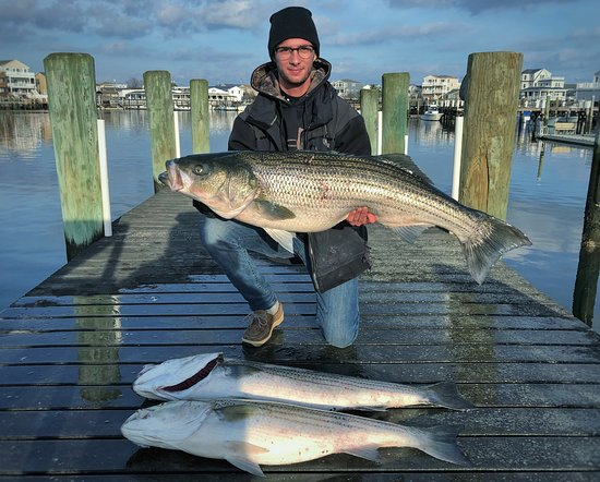 Tyin' Knots Charters: Striped Bass Fishing Trip