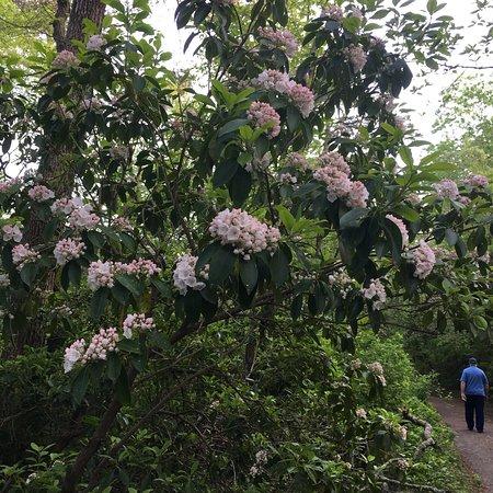 Elmer, Nueva Jersey: Parvin spring time