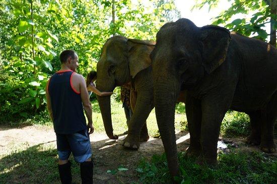 MandaLao Elephant Conservation: Saying our Goodbyes