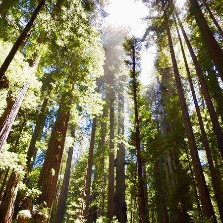 Orick, كاليفورنيا: photo4.jpg
