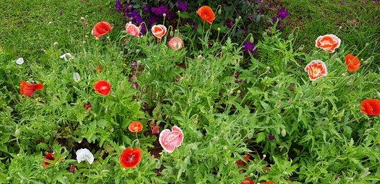 Dalat Flower Park: Flowers everywhere
