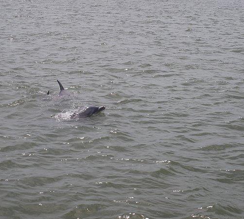 写真Captain Mike's Dolphin Tours枚