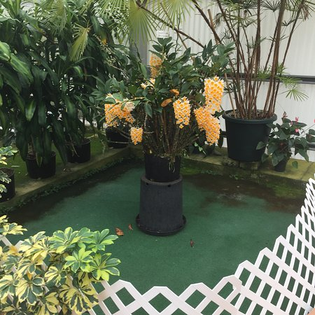 Akatsuka Orchid Gardens Φωτογραφία