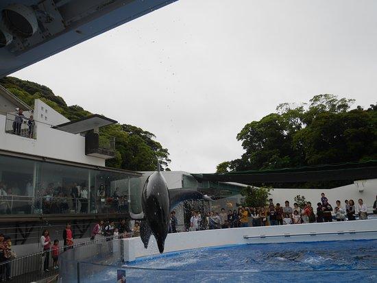 Kujukushima Aquarium Umikirara: いるかショーのジャンプ