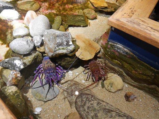 Kujukushima Aquarium Umikirara: 館内の磯の展示