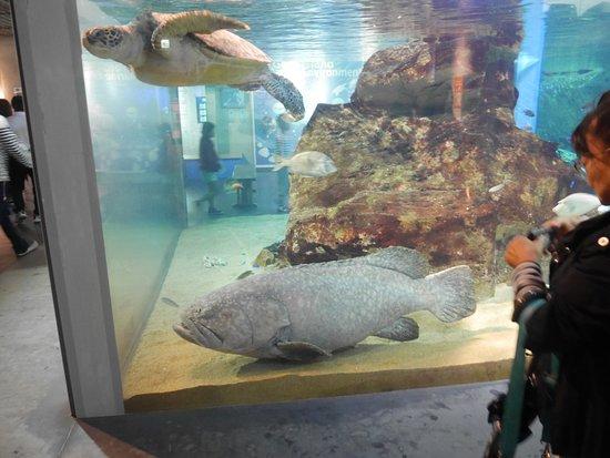 Kujukushima Aquarium Umikirara: 館内の水槽展示