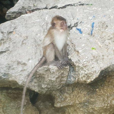 Monkey Beach: 20180518_142459_large.jpg