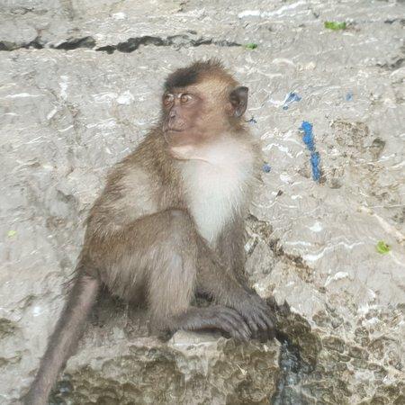 Monkey Beach Foto