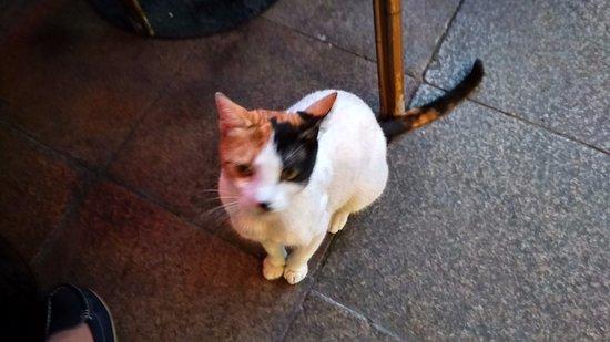Διαμέρισμα Σουλταναχμέτ: стамбульские кошки
