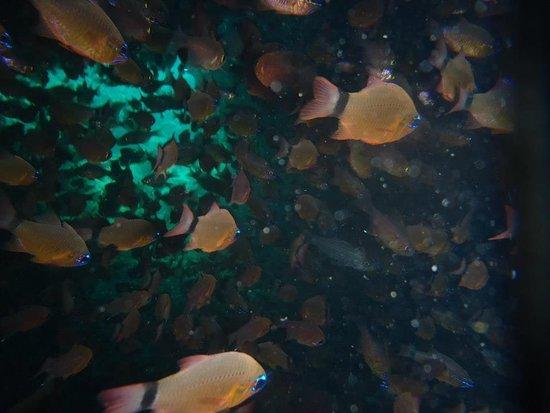 Scuba Lanka: Beautiful shoals of fish