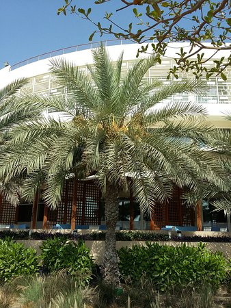 Al Mussanah, Omán: 20180519_083121_large.jpg