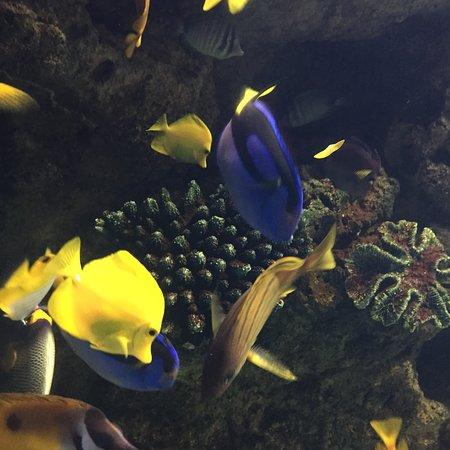 Sochi Discovery World Aquarium: Адлерский океанариум
