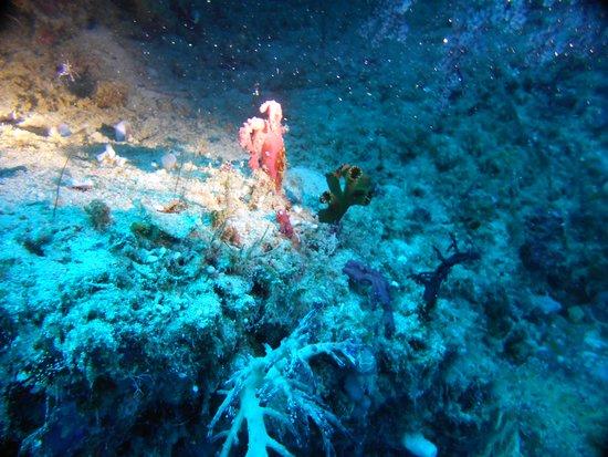 The Blue Abyss Dive Shop: A Umbrella avec Jun