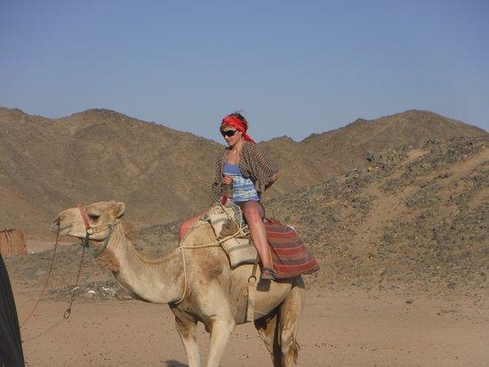Falcon Adventure - Hurghada: Ship of the desert