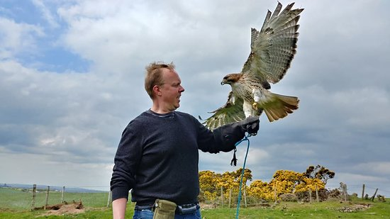 Newgrange Falconry: A great day with the falcons.