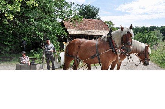 Ungersheim, فرنسا: Attelage de chevaux